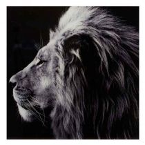 "Tableau Photo Plexiglas ""Lion"" 75x75cm"